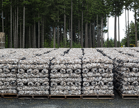 stacks-of-shellfish-on-pallets.jpg